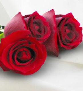 http://1.bp.blogspot.com/_NkFZCwaWWJA/Rjh4IMG2cbI/AAAAAAAAAEk/ZsKbFZJsEnA/s320/ROSAS+3.jpg