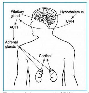 High Cortisol Symptoms/PTSD, Part 1