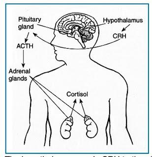 High Cortisol Symptoms/PTSD, Part 2