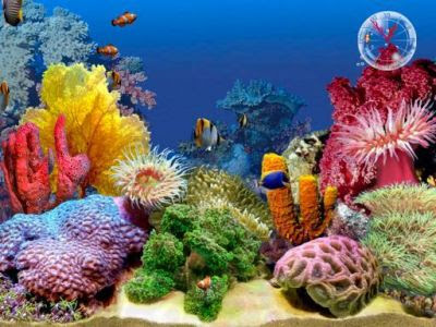 3D Tropical Fish Aquarium III Screensaver (Full Version)
