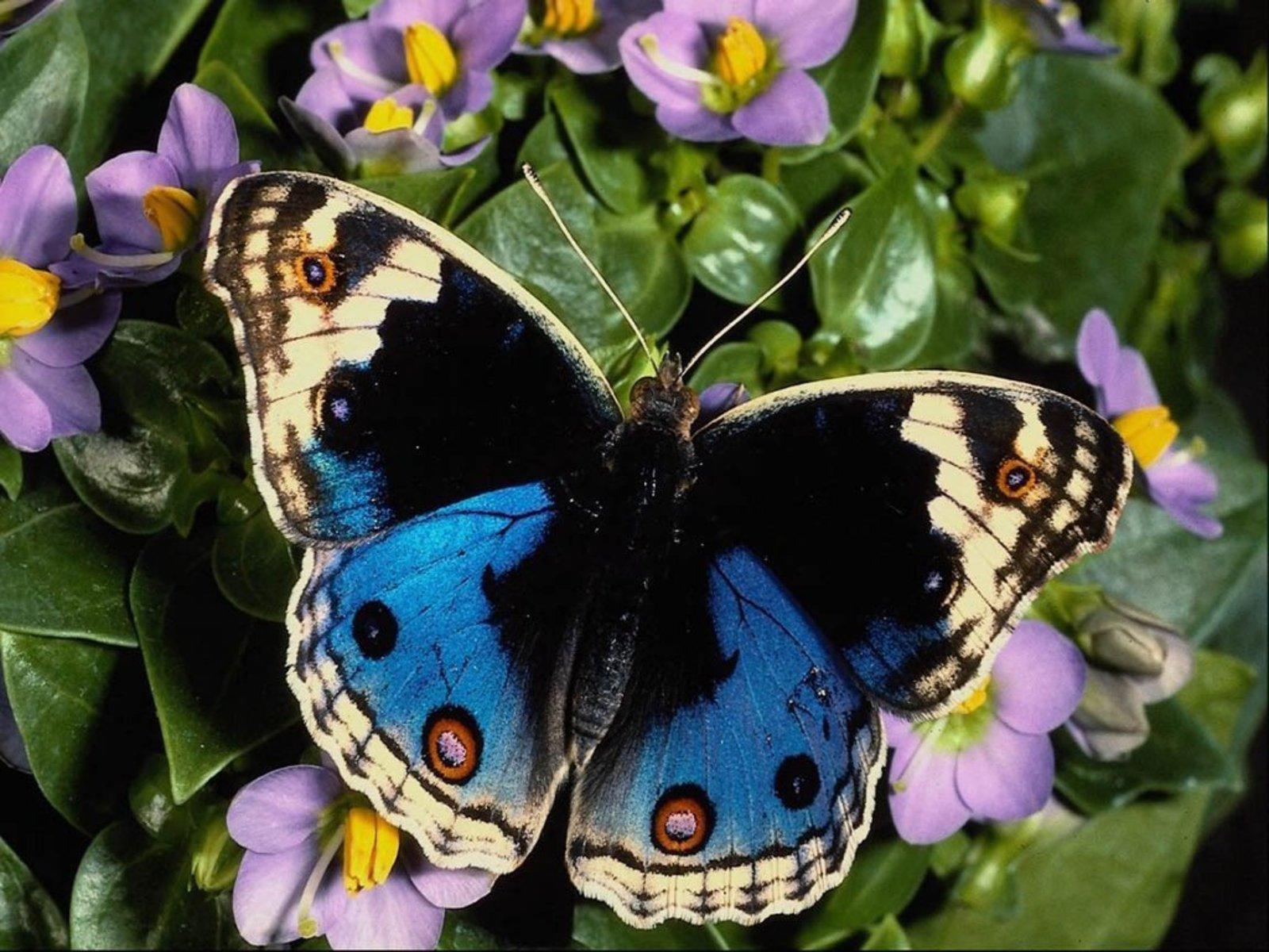 butterfly+photo.jpg+%25282%2529.jpg