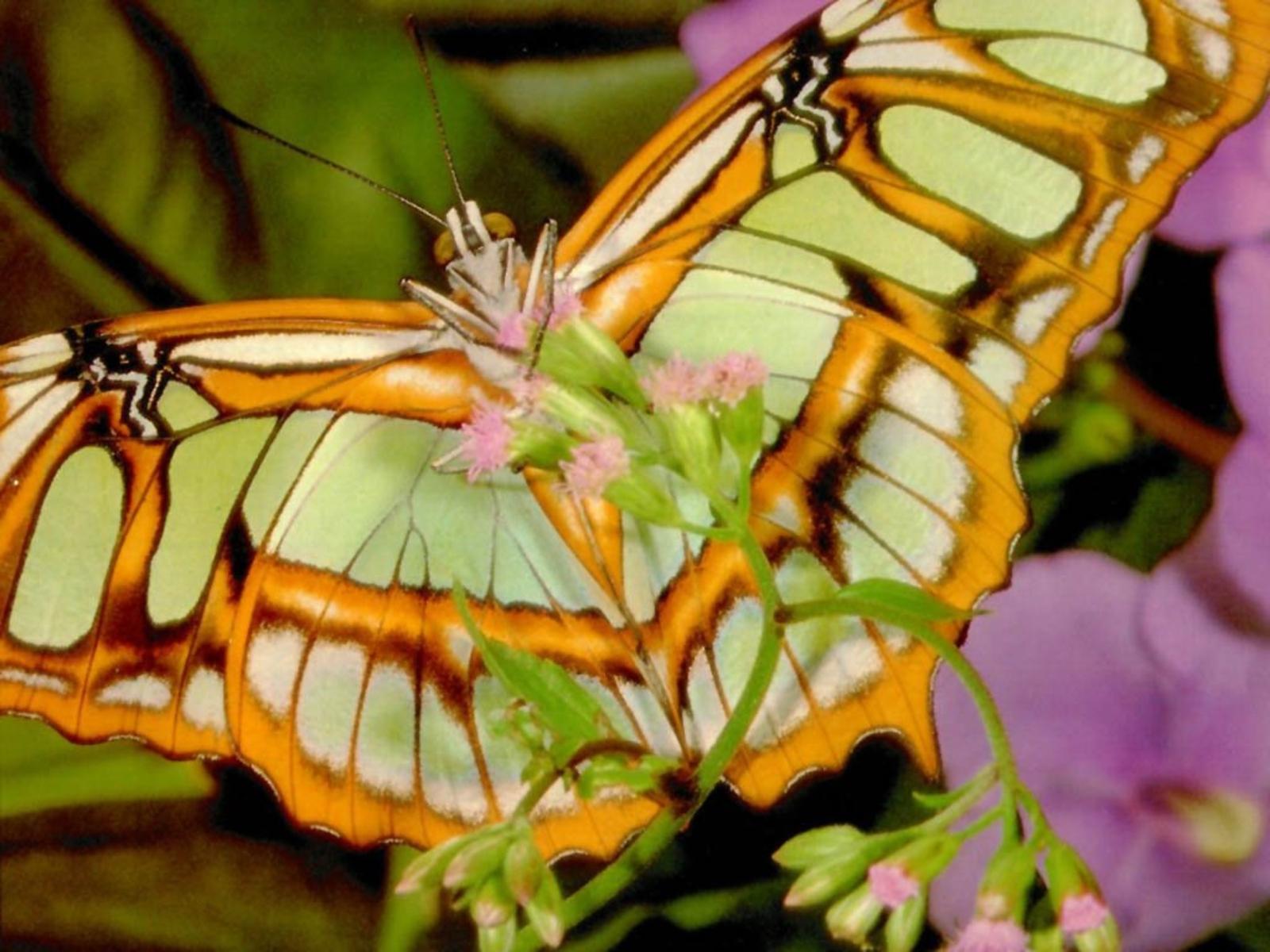 http://1.bp.blogspot.com/_Nke1Q0QgLLo/TQDCET80_uI/AAAAAAAABsI/1zjOtgu2dQ8/s1600/butterfly%252Bphoto.jpg%252B%2525252811%25252529.jpg
