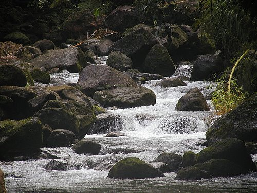 Mountain Stream, Dominica