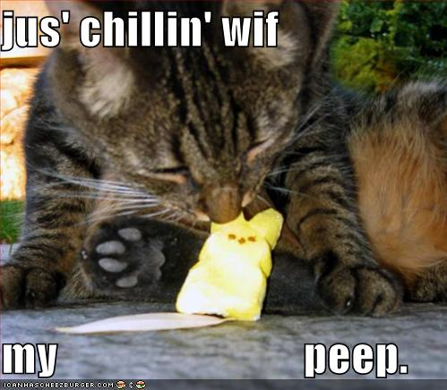 funny-pictures-cat-eats-marshmallow-peep.jpg
