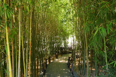 Asunta rufino 39 s travels thru life a day at huntington for Plants found in japanese gardens