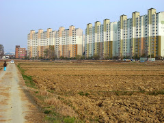 Rice field and apartments