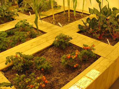 Underground Urban Farm In Japan (9) 6