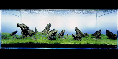 Aquarium Art 9