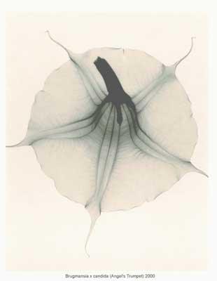 X-Ray Art (3) 2