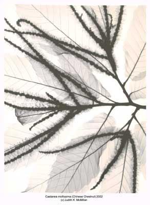 X-Ray Art (3) 3