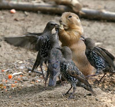 squirel & pigeons