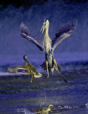 Best Animal Photos In 2007 By National Geographic (3) 1