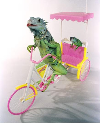 two iguana on a tiny tricycle