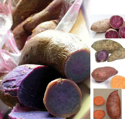 Okinawa sweet potatoes, Garnett sweet potato, also known as the Purple Yam