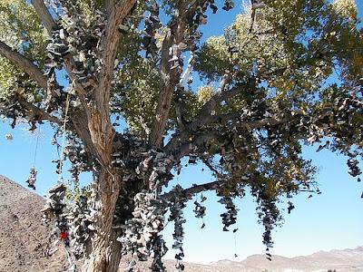 Shoe Trees (36) 25