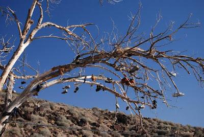 Shoe Trees (36) 11