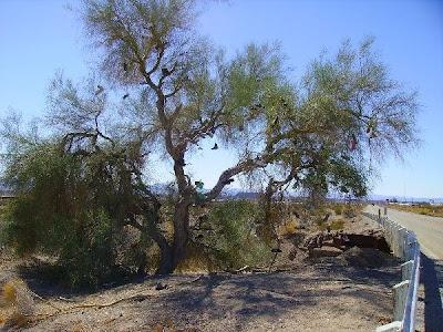 Shoe Trees (36) 14
