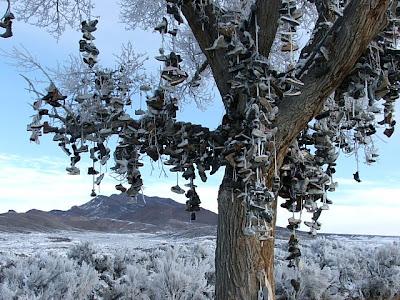 Shoe Trees (36) 4