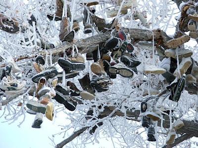 Shoe Trees (36) 5