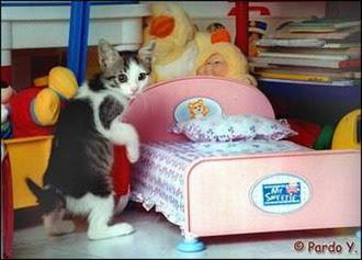 Cats+(23).jpg