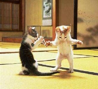 Cats+(17).jpg