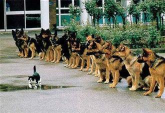 Cats+(16).jpg