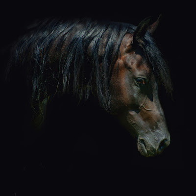Horse+(11).jpg