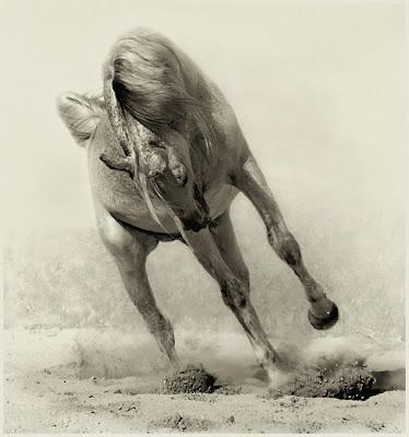 Horse+(9).jpg