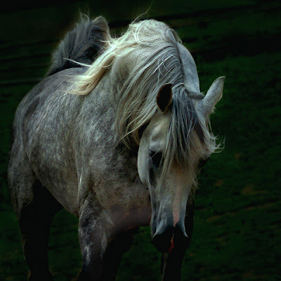 Horse+(4).jpg