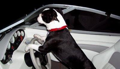 Dog+driving