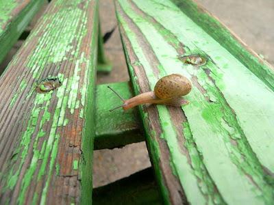 Snail+1.jpg