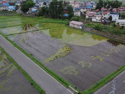 Beautiful Rice Field Art  10