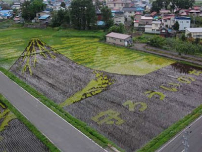 Beautiful Rice Field Art  11