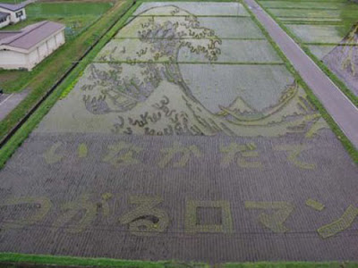 Beautiful Rice Field Art  5