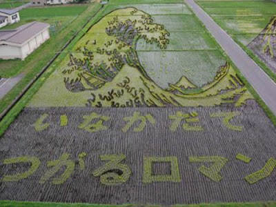 Beautiful Rice Field Art   6