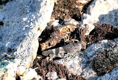 Animal Camouflage (51) 18
