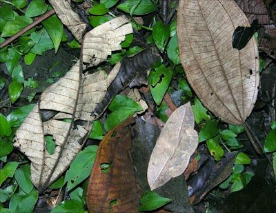 Animal Camouflage (51) 14