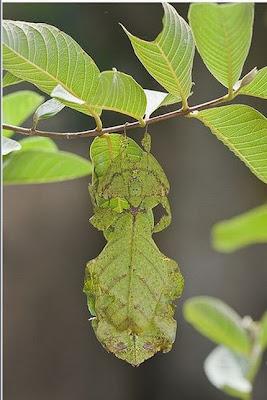 Animal Camouflage (51) 11