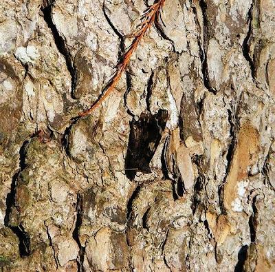 Animal Camouflage (51) 10