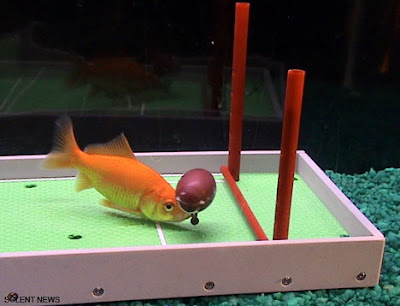 Intelligent Fish (7) 3