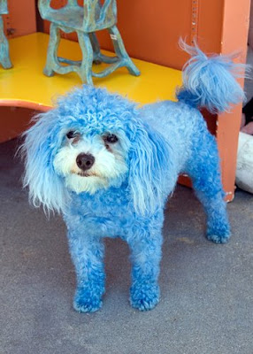 Colorful Dogs (16) 4