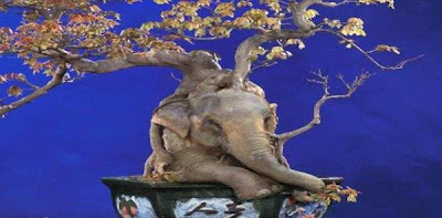 How to hide an elephant (8) 7