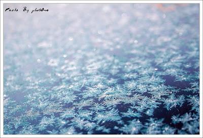Ice Flowers (6) 4