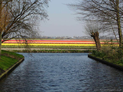 Spectacular Display Of Color - Tulip Fields (11) 1