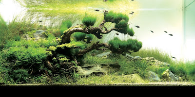 The 2008 International Aquatic Plant Layout Contest (3) 3