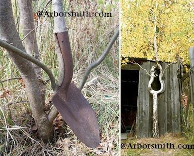 Arborsculpture (3) 2