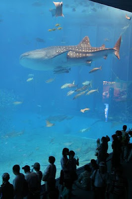 Okinawa Churaumi Aquarium (2) 2