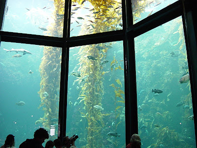Cool Aquariums and Unusual Fish Tanks Designs (50) 11