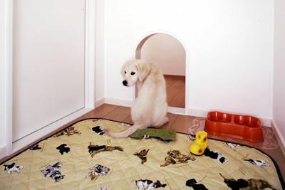 Dog Friendly Home Designs(18) 6