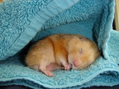 Cute Sleeping Animals (30) 27
